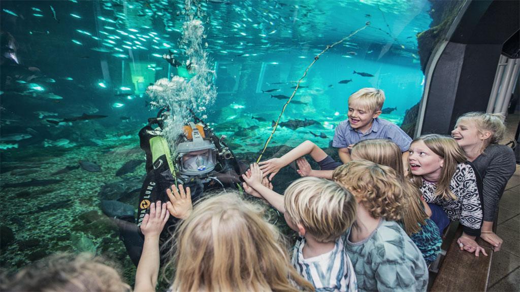 sove i kattegatcenteret sove med hajer oplevelsesgave til børn jylland gave til børn oplevelse for børn djurs