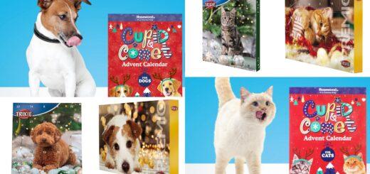 julekalender til dyr 2020, adventskalender til dyr 2020, pakkekalender til dyr 2020, dyre julekalender 2020, dyre pakkekalender 2020, dyre adventskalender 2020, julekalender til katte 2020, pakkekalender til katte 2020, adventskalender til katte 2020, julekalender til hunde 2020, adventskalender til hunde 2020, pakkekalender til hunde 2020, katte julekalender 2020, hunde julekalender 2020, alletiders gave, julekalender til kæledyr, pakkekalender til kæledyr, adventskalender til kæledyr, alletiders gave, gaveinspiration